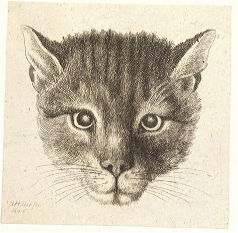 Filewenceslas Hollar  Head Of A Cat (small Size)jpg