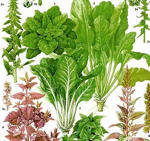 Spinach Swiss Chard Salad Plant Flowers Food Chart Vegetable