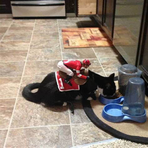 terrifyingly cute costumed pets  ready  halloween    awesome