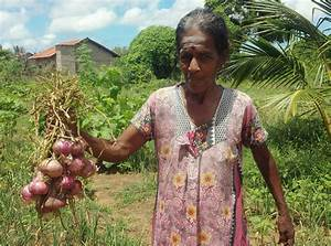 Introducing Innovative Agricultural Methods in Sri Lanka ...