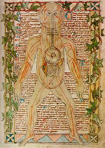 History Of The Arteries And Veins