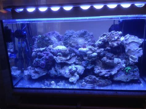 un aquarium de filtration est plac 233 dans le meuble avec toute la partie technique