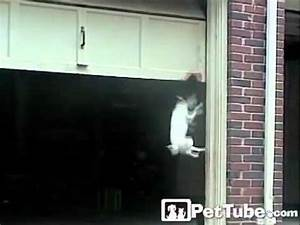 The world39s biggest dog door pettube youtube for Dog door for garage door