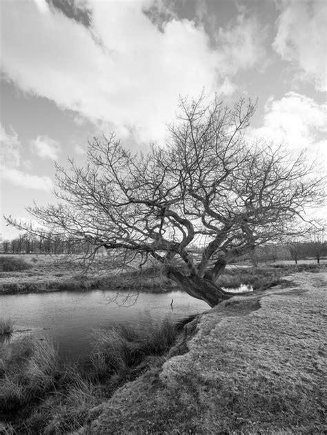 papier peint image en noir et blanc d un vieil arbre par