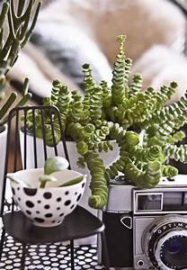 Wohnen In Grün : wohnen mit pflanzen fernweh in gr n buch und ~ Michelbontemps.com Haus und Dekorationen