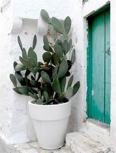 Comment Entretenir Un Cactus : figuier de barbarie planter et entretenir ooreka ~ Nature-et-papiers.com Idées de Décoration