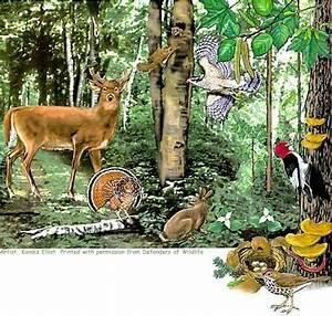 EEK! - Critter Habitats - Wisconsin Forests Poster (part 2)
