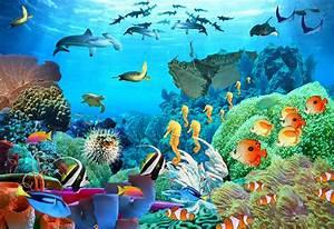 katie.m.blatcher: Aquatic Life completed!  Aquatic