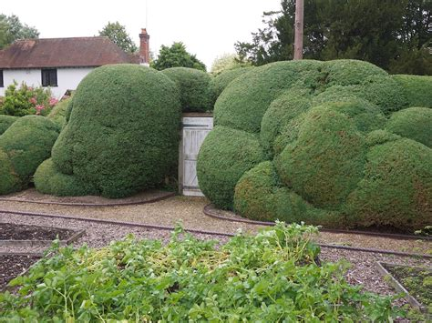 niwaki cloud pruned box hedge