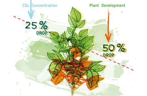 carbon dioxide co2 applications in indoor growing