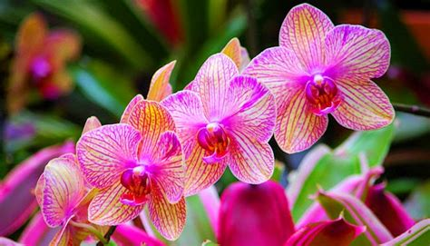 gambar foto bunga anggrek  cantik ayeeycom