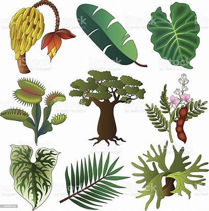 African Plants Tropical Istock