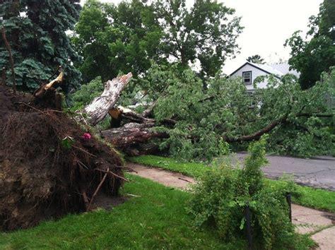 qa   tree damage  extensive mpr news