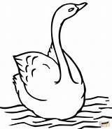 Swan Coloring Swimming Pages Printable Drawing Supercoloring sketch template