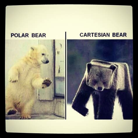 math joke funny humor polarbear cartesian bear math funny