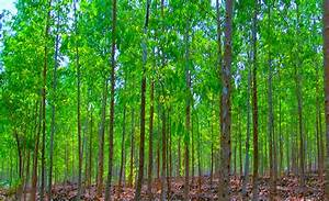 Ideas Galore Reforestation Helps Ease Global Warming Due