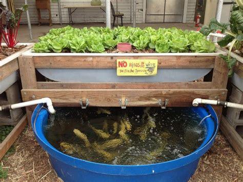 fish picks  aquaponics utah aquaponics