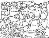 Rainforest Drawing Tropical Animals Drawings Background Getdrawings sketch template