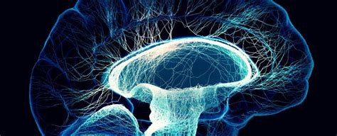 mathematical model shows   brains  complex