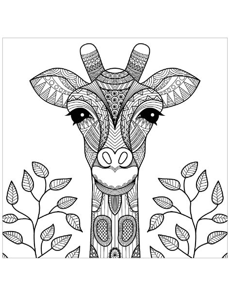 giraffe head  leaves giraffes adult coloring pages