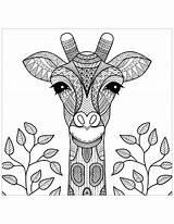 Giraffe Coloring Head Giraffes Adult Animals Leaves Nature sketch template