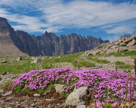 piegan pass photo glacier park photo gallery