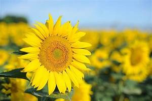 Blumen Im Juli : 20 beliebte garten blumen f r fr hling sommer herbst ~ Lizthompson.info Haus und Dekorationen