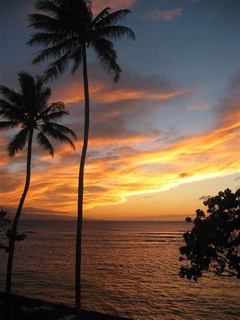 photo hawaii sunset tropical  image