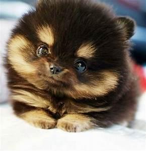 animal, cute, dog, fluffy, inu - image #272090 on Favim.com