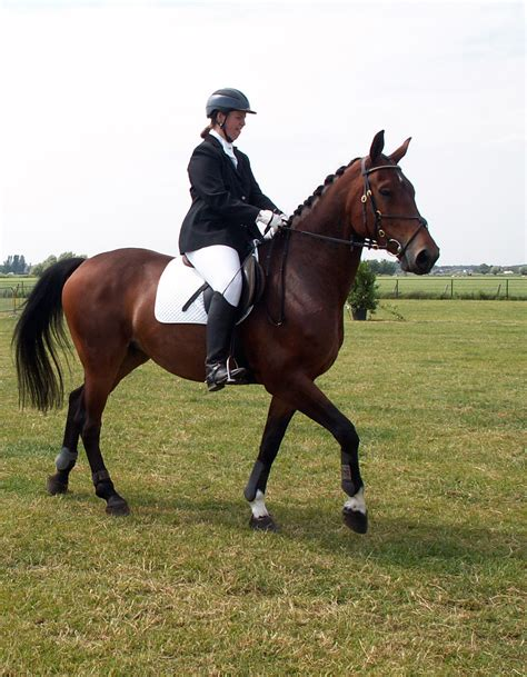 Equestrianism Pictures - Freaking News