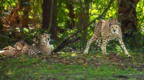 kilimanjaro safaris animal kingdom attractions walt disney world resort