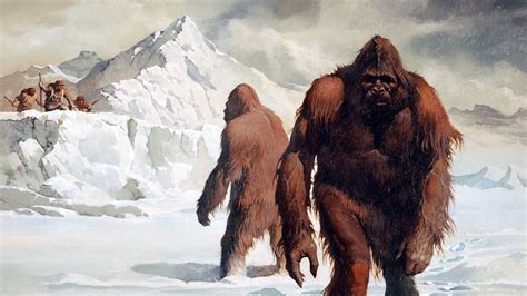 abominable snowman study finds  yeti