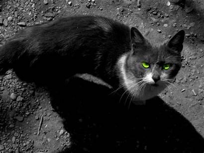 Warrior Cats Cat Backgrounds Dark Wallpapers Sky