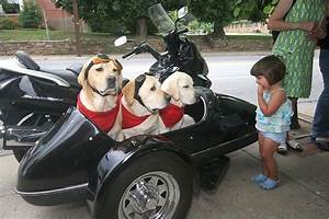 Sidecar Motorcycle Dog | www.imgkid.com - The Image Kid ...