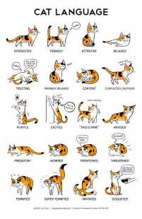 cat translator why do cats meow top reasons your cats meow kitty cats