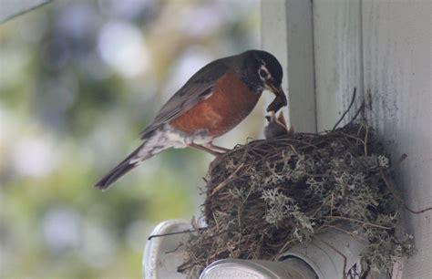 Bird Feeding Baby Bird Feedersbird Feeders