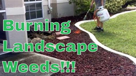 how to land scape how to kill rid landscape weeds with a propane torch youtube