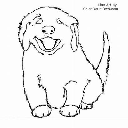 Coloring Pages Puppies Retriever Golden Puppy Husky