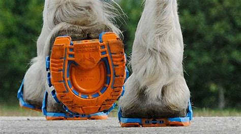Clip before you clop: New flexible clip-on horseshoes get ...