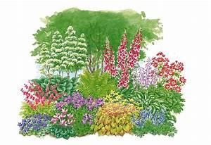 Set Pflanzenset Schattenpflanzen 11 Pfl OTTO