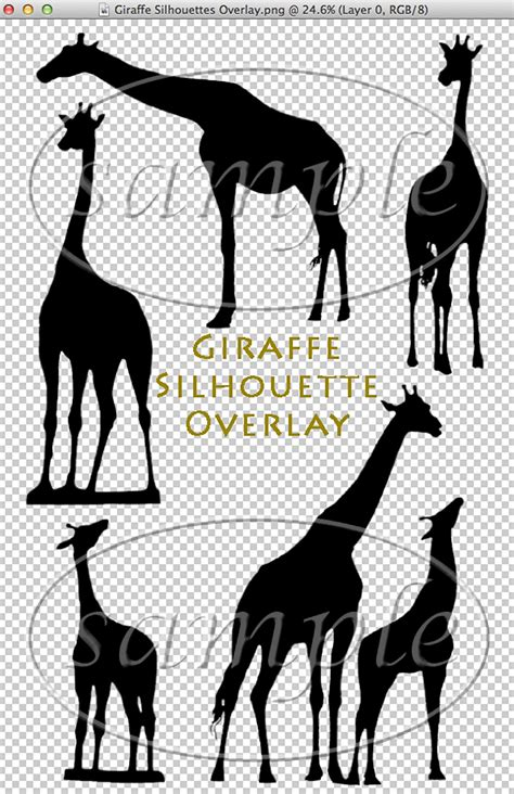 giraffe silhouette overlay shoot   moon images