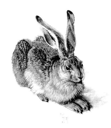 young hare  albrecht durer