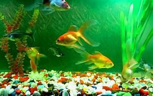 Aquariums images Aquarium Wallpaper HD wallpaper and ...