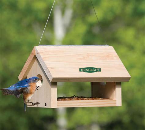 duncraftcom duncraft  hanging bluebird feeder