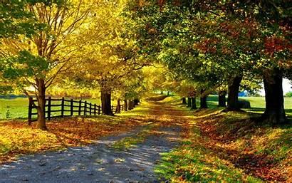 Foliage Autumn Trees Leaves Road Golden Fall