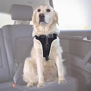 Harnais De Securite Pour Elagage : harnais s curit pour chien dog protect accessoires ~ Edinachiropracticcenter.com Idées de Décoration