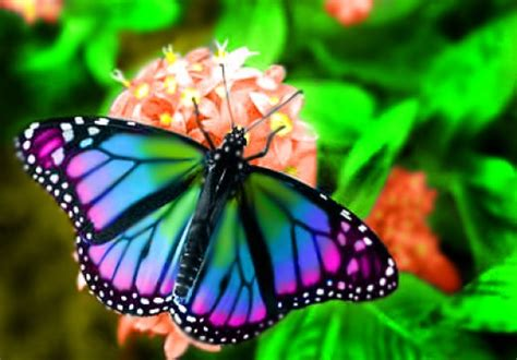 beautiful butterflies steemit