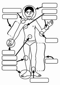 Preschool Body Parts Coloring Pages - Coloring Home