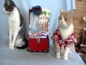 Laid Back Cat in a Hawaiian Shirt - YouTube