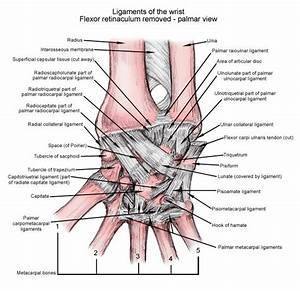 122 Best Images About Hand Therapy On Pinterest